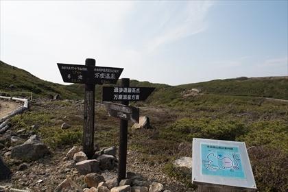 2017-6-20 草津白根山19 (1 - 1DSC_1546)_R
