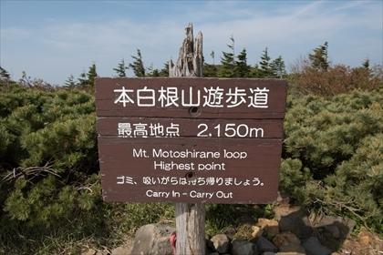 2017-6-20 草津白根山23 (1 - 1DSC_1553)_R
