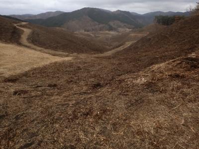 砥峰高原の野焼き跡
