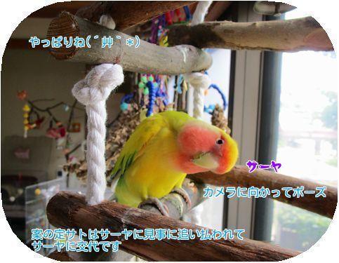 20170518131005a96.jpg
