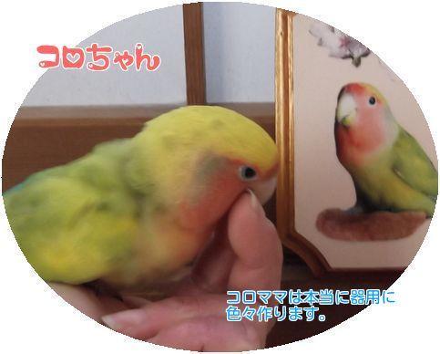 ①-1コロちゃん