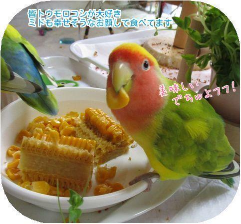 ②トウモロコシミド