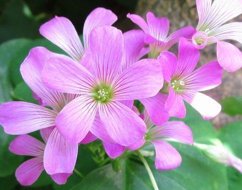 ⑦可愛いお花