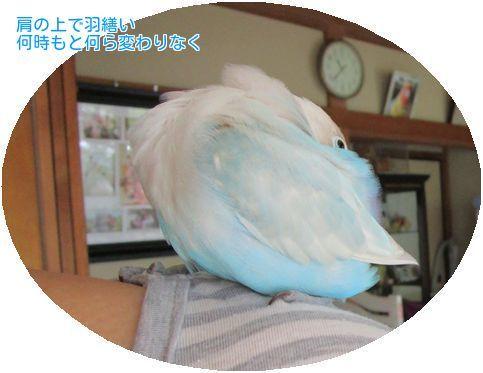 ⑤肩の上のサト