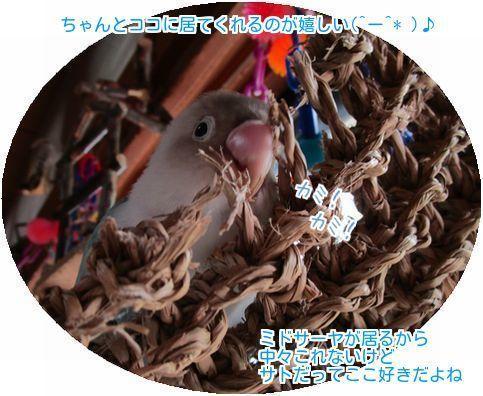 ④サトカミカミ