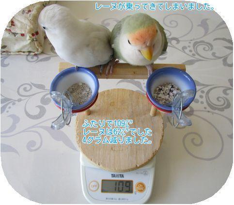 ⑥レーヌの体重