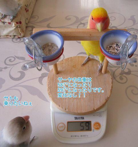 ⑦サーヤの体重