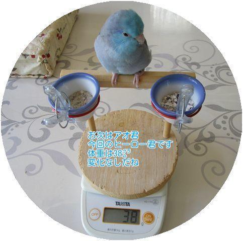 ⑧アオ君の体重
