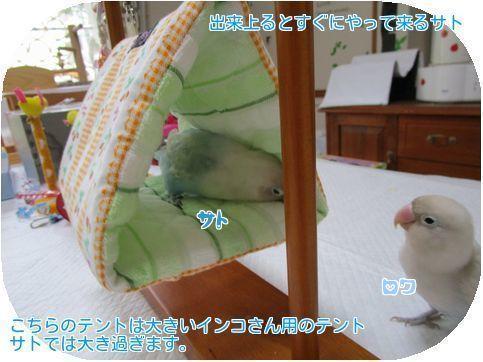 ①大きいテント