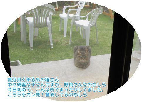 ⑥野良猫?