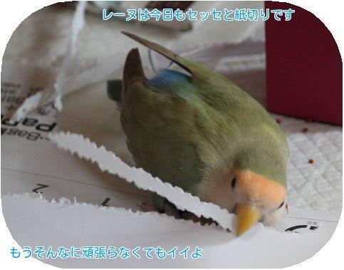④レーヌ紙切り