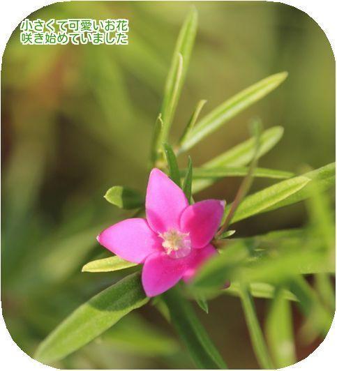 ⑤小さな花
