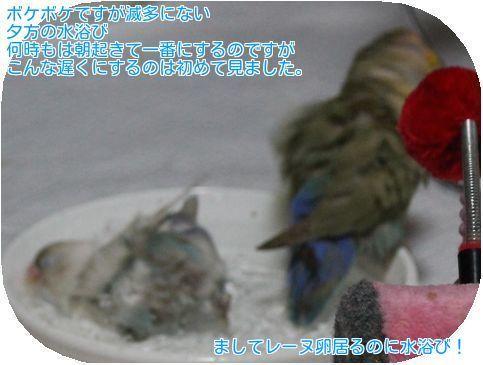 ①ロワレーヌ水浴び