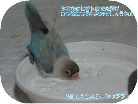 ⑤サトまで水浴び