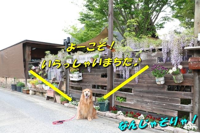 鴨池 法子さん誕生日 009
