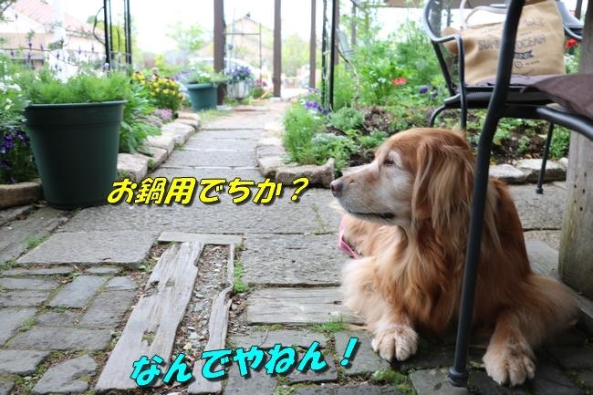 鴨池 法子さん誕生日 019