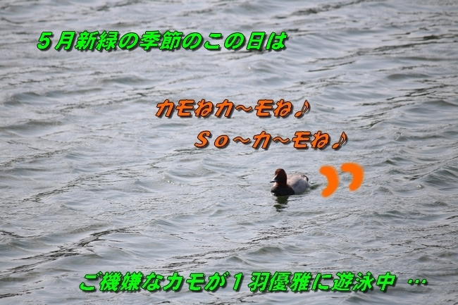 鴨池 法子さん誕生日 102