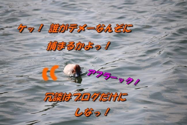 鴨池 法子さん誕生日 103