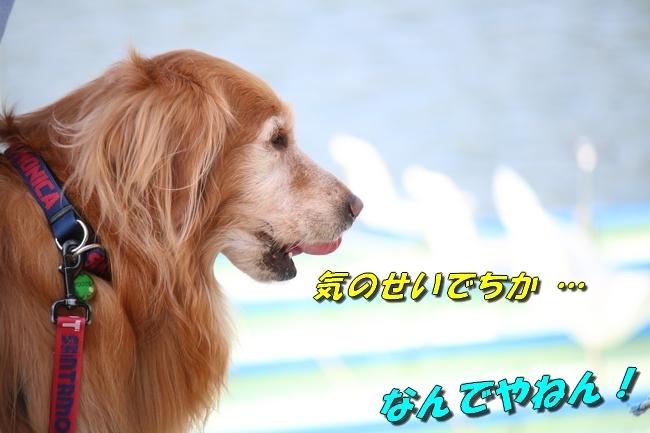 鴨池 法子さん誕生日 124
