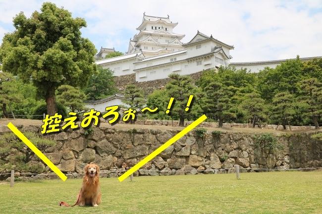 姫路城しょこら家と共に 075