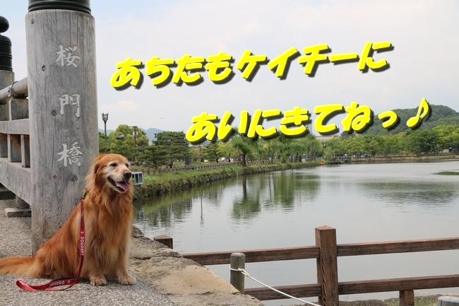 姫路城しょこら家と共に 092