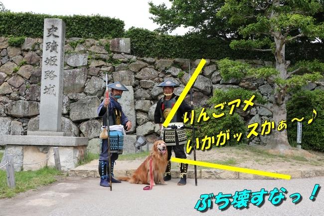姫路城しょこら家と共に 087
