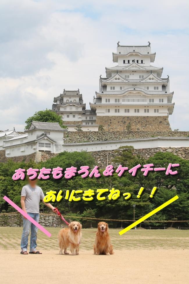 姫路城しょこら家と共に 046