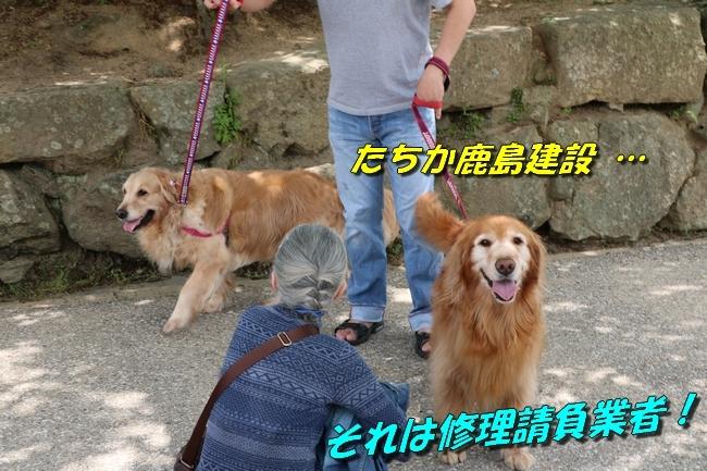 姫路城しょこら家と共に 053
