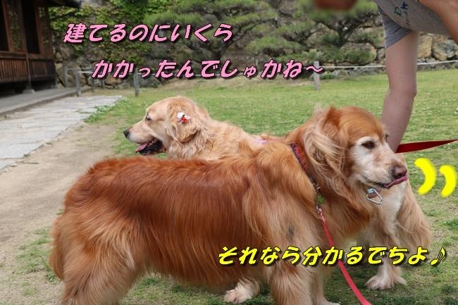 姫路城しょこら家と共に 072