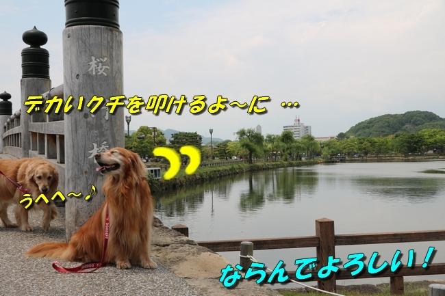 姫路城しょこら家と共に 090