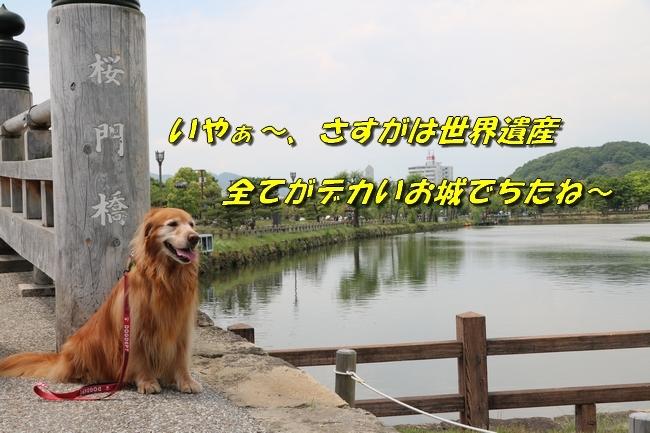 姫路城しょこら家と共に 094