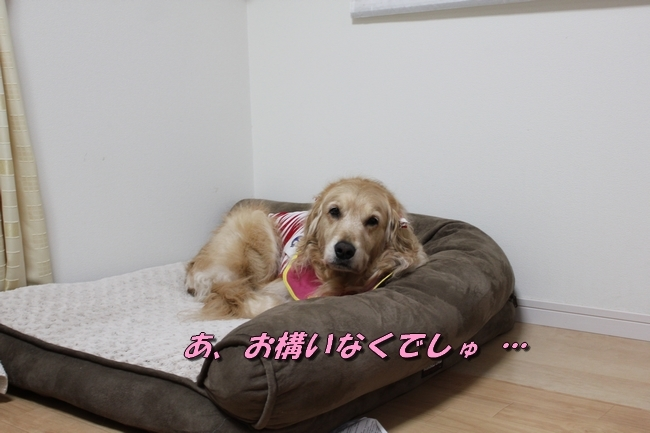 まろんちゃん来訪 011