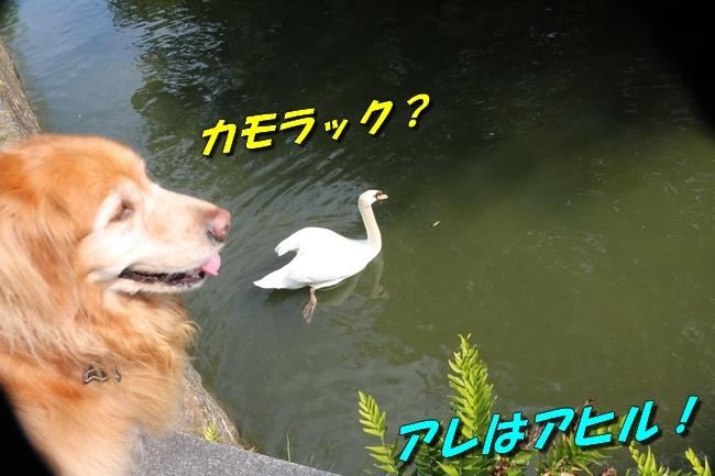 倉敷20170530 157