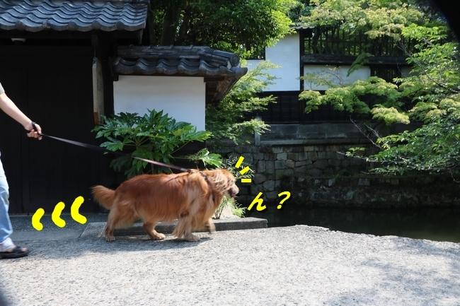 倉敷20170530 204