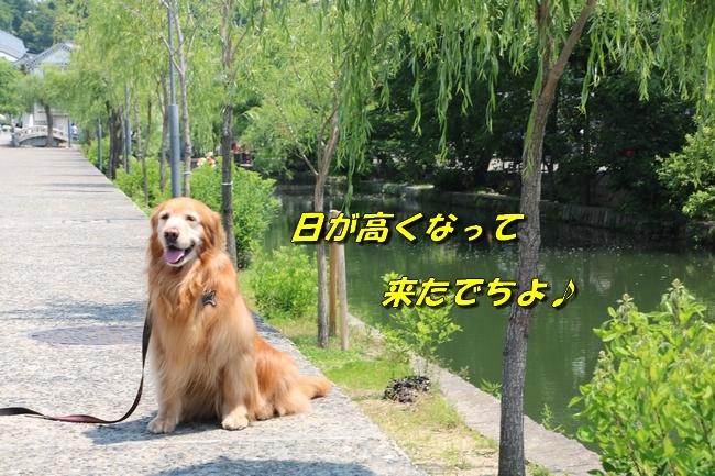 倉敷20170530 386