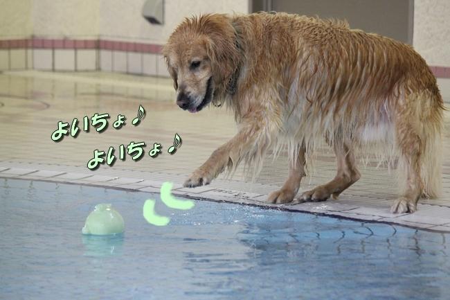 サリー君とお水の日 271