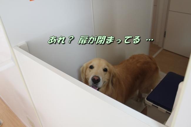こむぎちゃんとこたろうくんプール 006