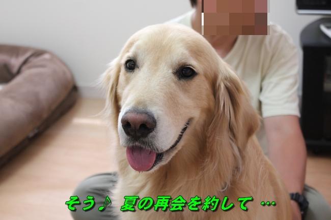 こむぎちゃんとこたろうくんプール 009