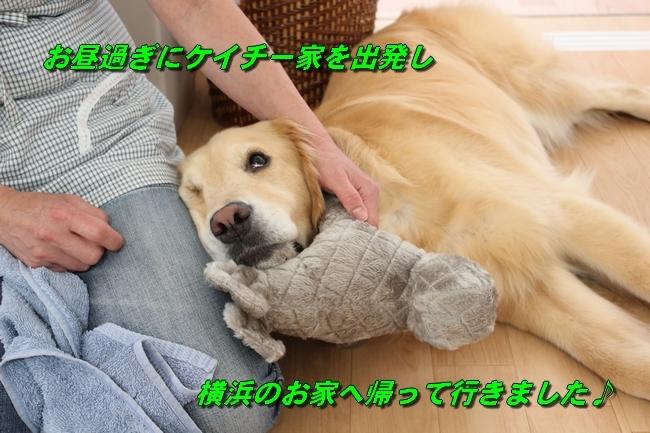 こむぎちゃんとこたろうくんプール 011
