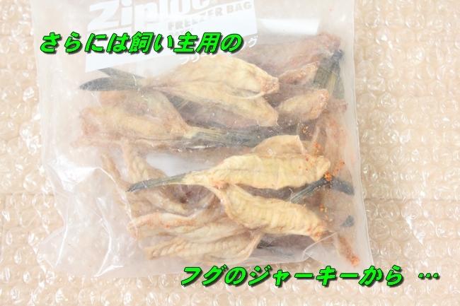 モモちゃん金目鯛 005