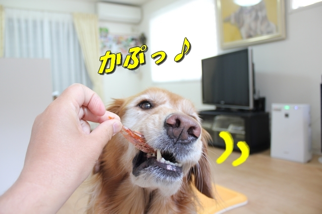 モモちゃん金目鯛 031