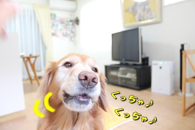 モモちゃん金目鯛 036