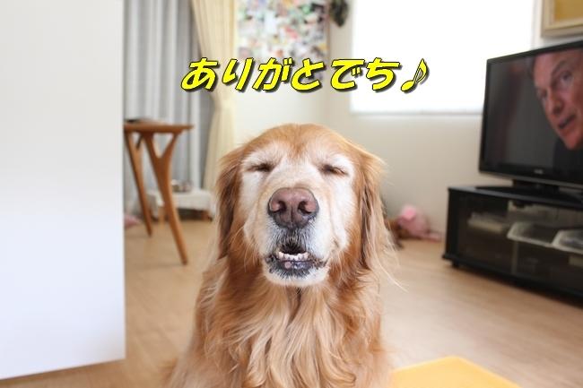 モモちゃん金目鯛 040