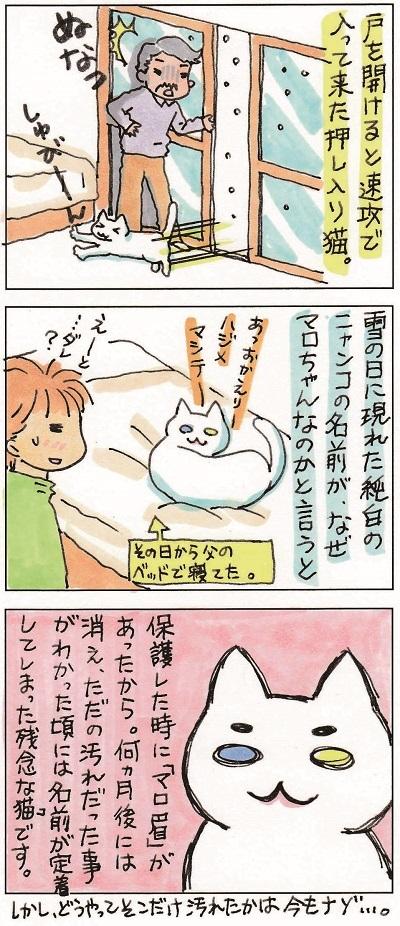 マロちゃん 2-2