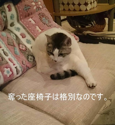 猫飼いのマナー