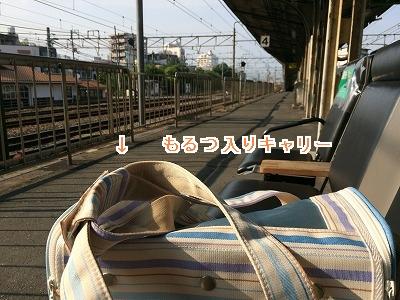 IMG_6921.jpg