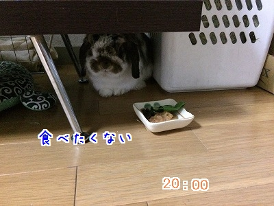 IMG_6975.jpg