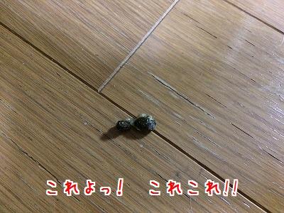 IMG_6982.jpg