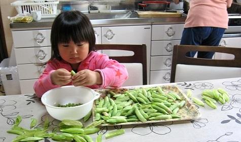 エンドウ豆3