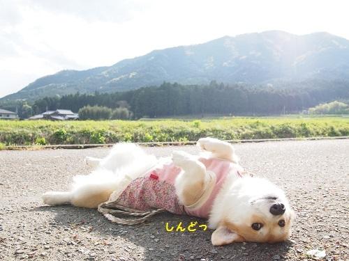 しんどくて道で寝た